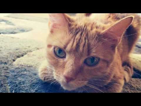 Wu Kitty Trailer for Rescued 2: The Healing Stories of 12 Cats Through Their Eyes