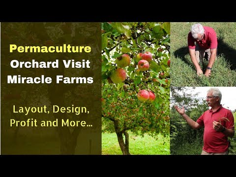 How to Start a Permaculture Orchard | Organic Miracle Farms | Layout, Deign, Profit and More...
