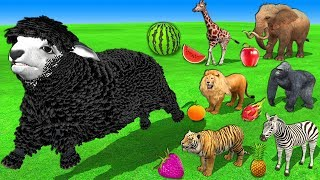 Farm Animals In Outdoor Playground - Mary Had A Little Lamb Nursery Rhymes