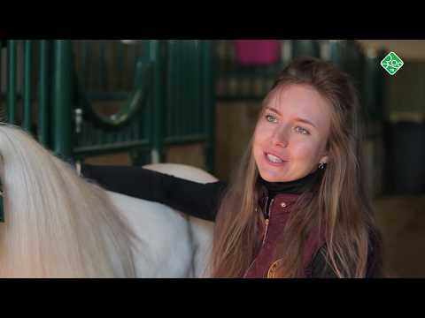 Ход конем. Миниатюрные лошади
