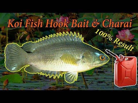 Koi Fish Charai & Hook Bait 100% Result