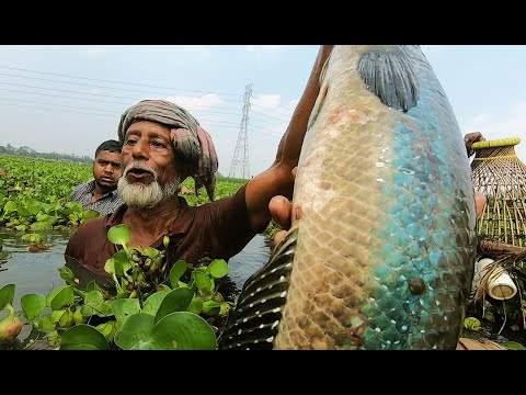 World Large Monster Fish Hunting By Polo Fish With Bamboo Trap Into Deep Water. Fishing Village Life