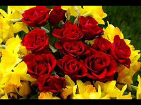 rose flowers gardens