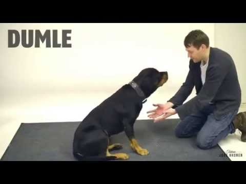 Dogs reaction to a magic trick!