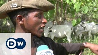 Herdsmen clash with farmers in Nigeria | DW News