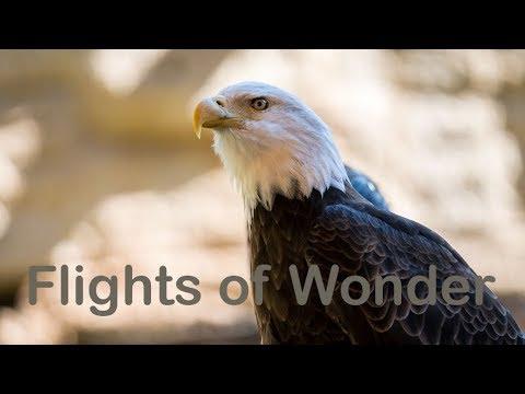 Flights of Wonder at Disney's Animal Kingdom (4K Multi-angle)