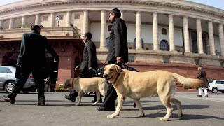 Army Dogs to march down Rajpath for Republic Day Parade