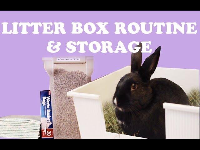 Rabbit Litter Box Set Up Routine, How Often Should I Change My Rabbits Bedding
