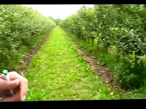 Danish fruit orchard