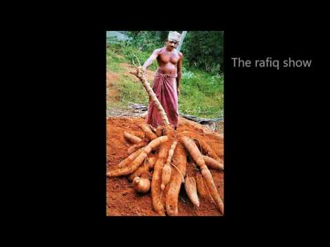 Top 10 Biggest fruit and Vegetable in World. part-3. The Rafiq Show