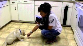 Puppy Training Lab Puppy Queso