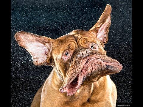 Top 10 funny dog pictures.    Top 10  foto di cani  divertenti