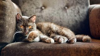 Как вывести запах кошачьей мочи с дивана