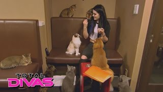 While in Tokyo, Paige calls Alicia Fox from a cat café: Total Divas: January 19, 2016