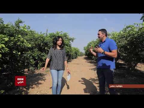 بتوقيت مصر : لقاء مع صاحب أحد مزارع البرتقال بعد تصدر للمركز الأول لتصدير البرتقال في العالم  - نشر قبل 4 ساعة