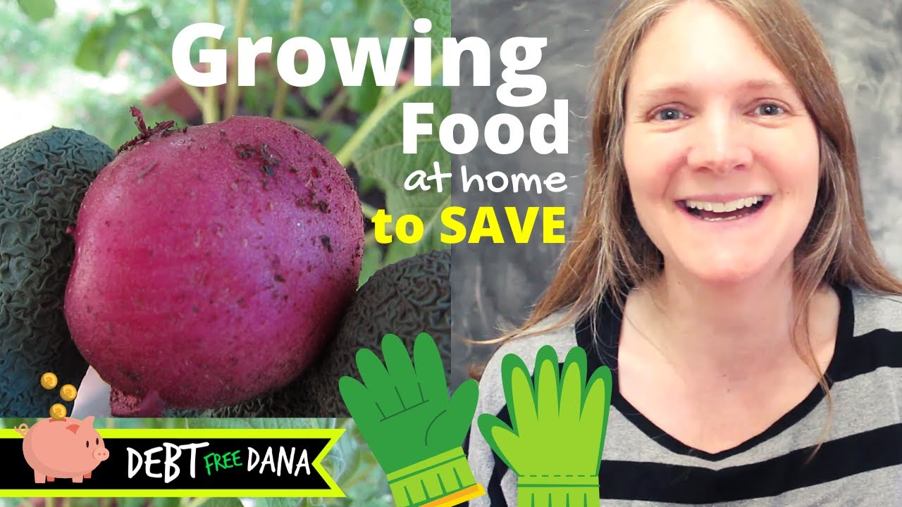 Growing Potatoes at Home in Containers (Food from Scraps to Lower Grocery Bills)