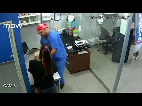 В Перу кот напал на ветеринара, который делал прививку собаке.
