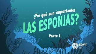Esponjas Marinas 01 | infografía animada BDMY