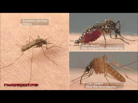 CDC: Deadly Mosquitoes Will Contaminate 75% Of United States