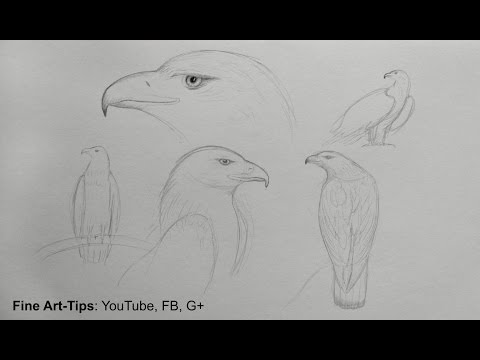 How to Sketch an Eagle - Sketching for a Sculpture