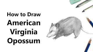 How to Draw a Virginia opossum with Pencils [Time Lapse]