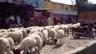 とめどなく流れる羊.