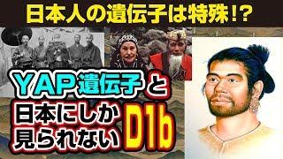 日本人の遺伝子は縄文人から!?YAP遺伝子と日本にしか見られないD1b遺伝子