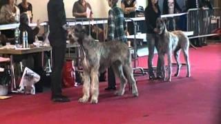 Irish Wolfhound Lausanne Dog Show Figaro De La Pierre Oiseau
