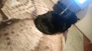 Кот чувствует ритм