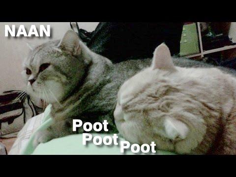 Pootis Cat