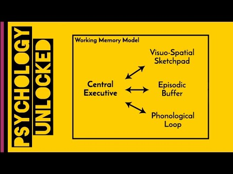 Working Memory | Baddeley & Hitch 1974 | Memory | Cognitive