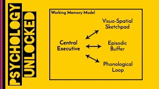 Working Memory | Baddeley & Hitch 1974 | Memory | Cognitive Psychology