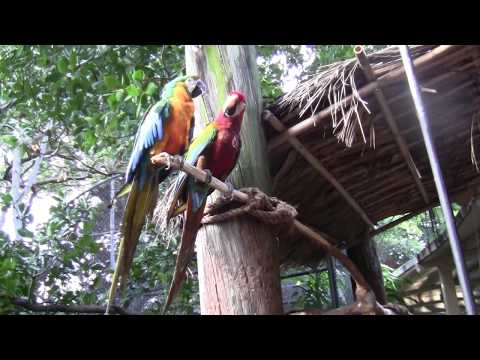 Jungle Island ,  Parrot Jungle Miami, Florida , Джангл Айленд Майами Флорида Մայամի Ֆլորիդա