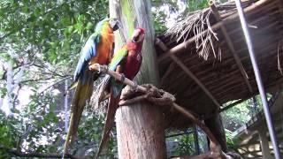 Jungle Island ,  Parrot Jungle Miami, Florida , Джангл Айленд Майами Флорида Մայամի Ֆլորիդա