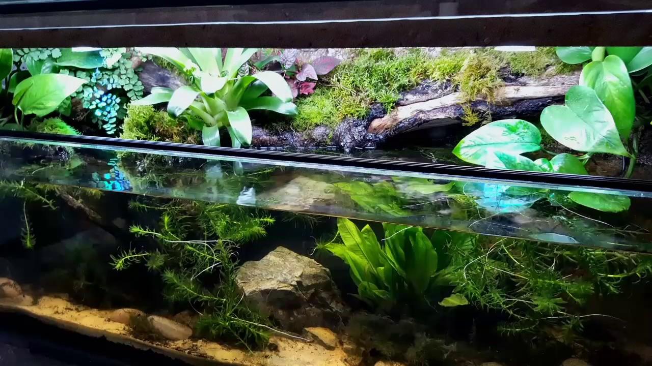 Semi Aquatic Vivarium Paludarium