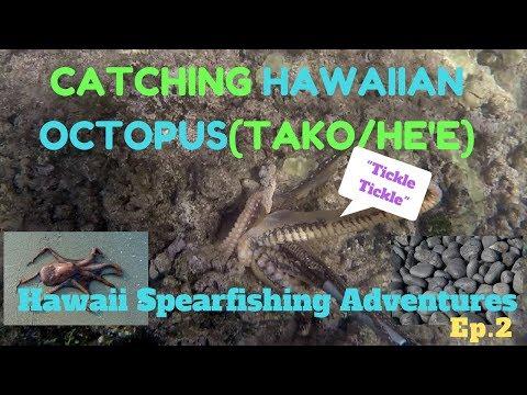 Spearfishing Hawaii 2018 Adventures-Tako Diving/Catching Hawaiian Octopus(He'e)