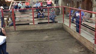Horse Auction 9/21/19