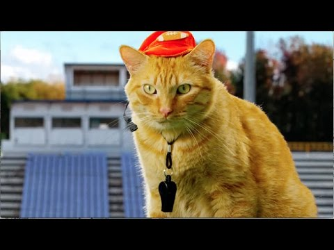 Thumbnail for Cat Video Kitten Bowl III - Coaching Champions