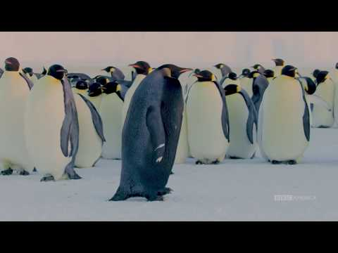 Kevin & Tracy - Rarest Penguin on Earth Caught on Camera in Antarctica