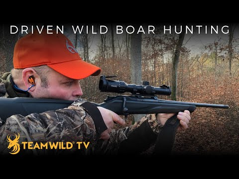 Driven Wild Boar Hunting In Germany
