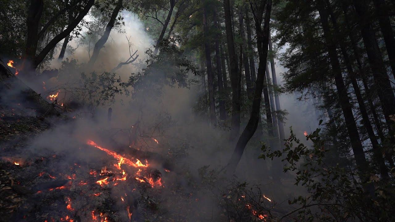 Sugar Pine Fire Troop