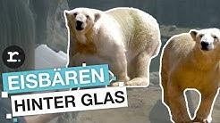 Schuften fürs Tierwohl: Tierpfleger im Zoo | reporter