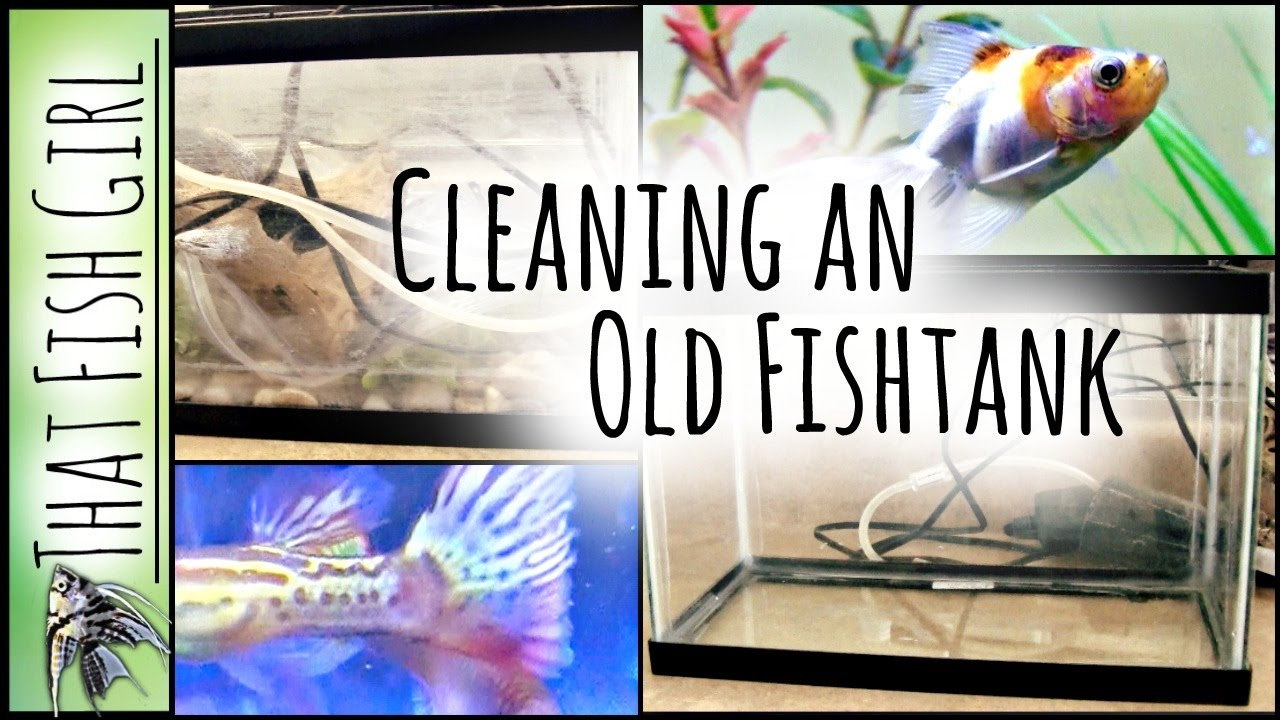 Fish tank used - How To Clean A Used Fish Tank