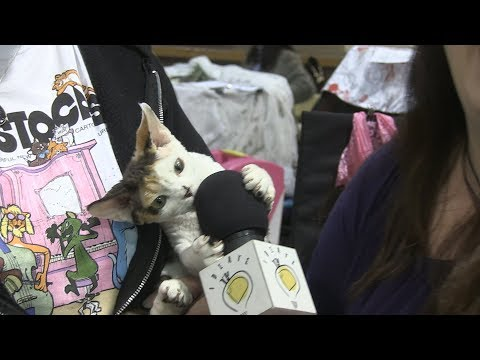 Malibu Cat Club CFA Cat Show 2019