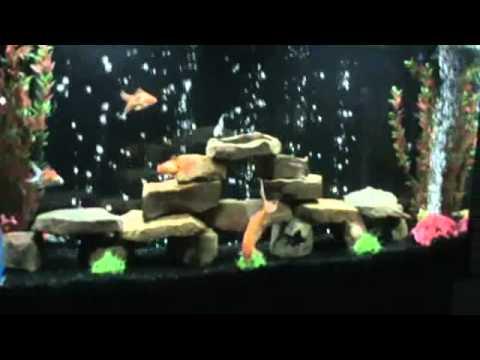 My updated 60 gallon fish tank youtube for Black fish tank gravel