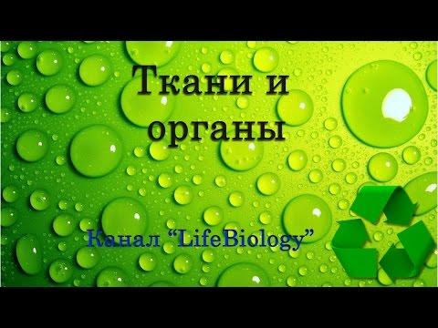 Ткани и органы