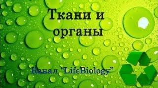 Ткани и органы(Совокупность клеток, сходных по происхождению, строению и выполняемым функциям, вместе с межклеточным..., 2015-05-26T10:43:23.000Z)