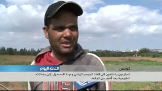 المزارعون في تونس يتطلعون إلى انقاذ الموسم الزراعي بعد أشهر من الجفاف