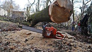 Wycinka drzew zagrażających budynkom    New Holland T6.165
