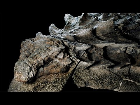 Mummified Remains Of 100 Million Yr Old Dinosaur Have Been Discovered